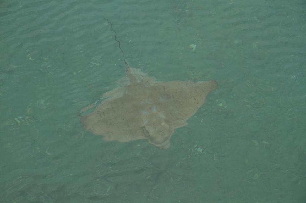 elaine bay stingray