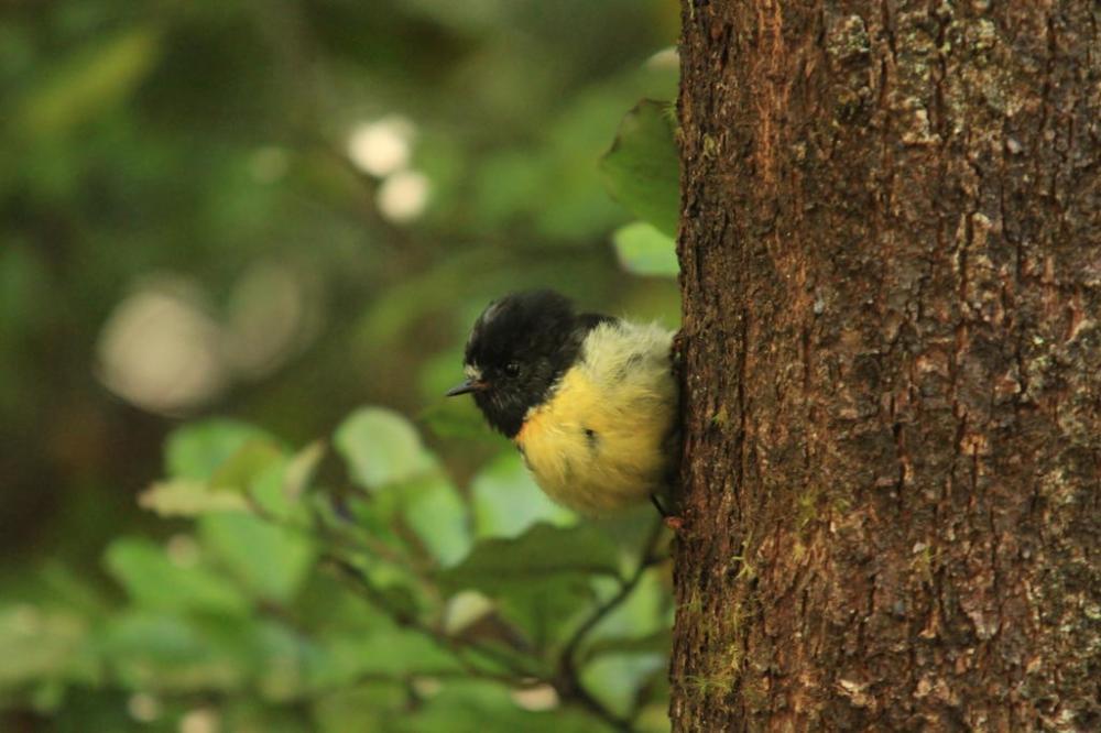 lake-sylvan-kleiner-vogel