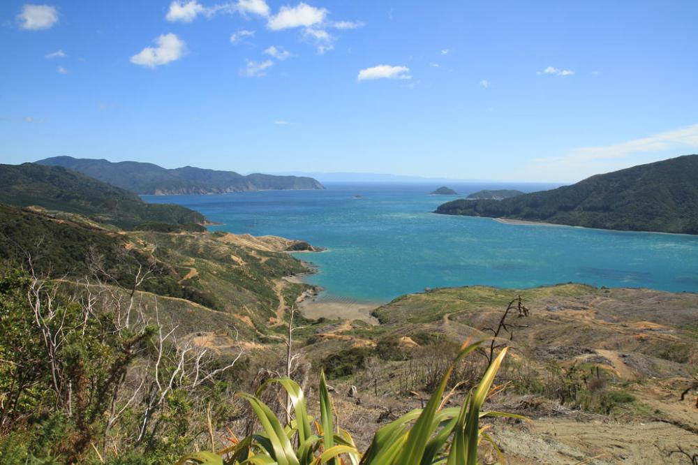 marlborough sounds nach elaine bay